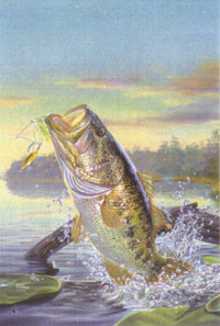 Large Mouth Bass Flag 28x40