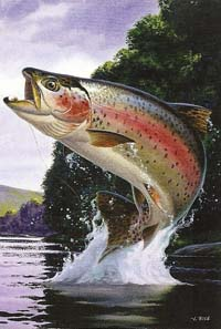 Rainbow Trout Silk Reflections Flag 29 x 43