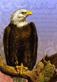 Bald Eagle Flag 28x40