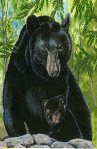 Black Bear Flag 28x40