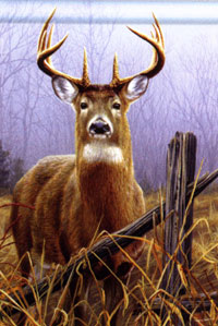 Watchful Buck Flag 28x40